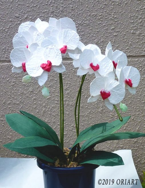 立体お花おりがみ「胡蝶蘭」